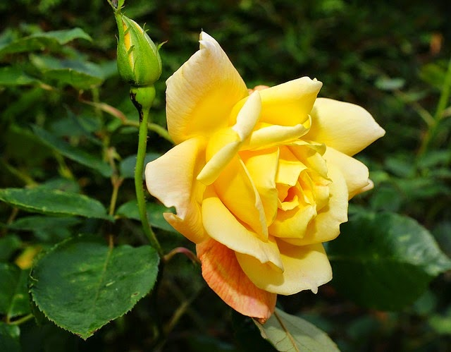 Simple Rose Garden: My Simple Lifestyle