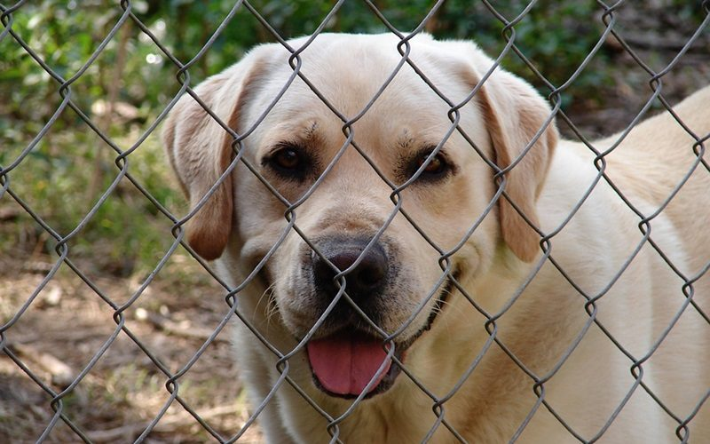 Things to Consider When Choosing a Dog-friendly Fence