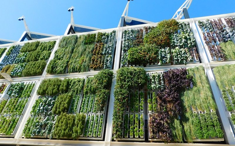 Reasons Why You Need to Install Living Walls
